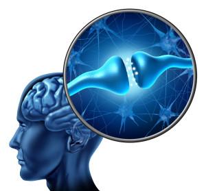 優れた脳の栄養とは?