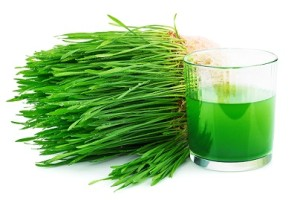 Wheat Grass with Juice (1)