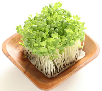 Broccoli Sprouts with Plate Web
