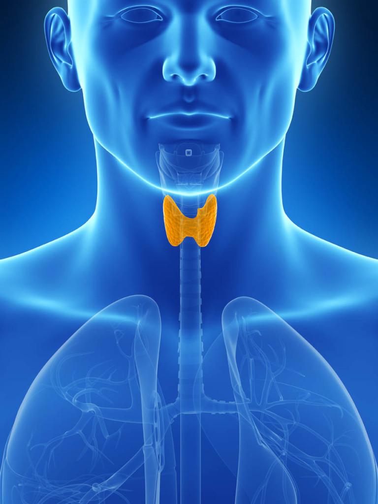 甲状腺に影響を与える毒素と放射性物質から自分を守る方法