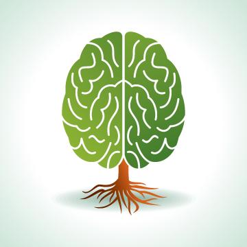 あなたの脳は「美しい」ですか?